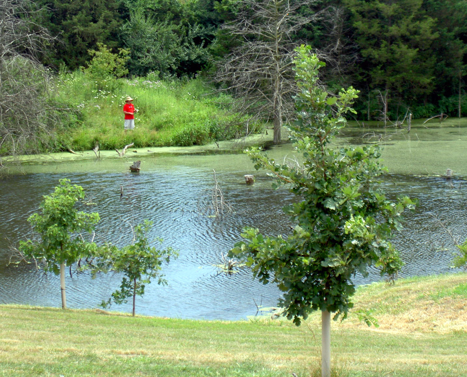 Pond at the Environmental Learning Center